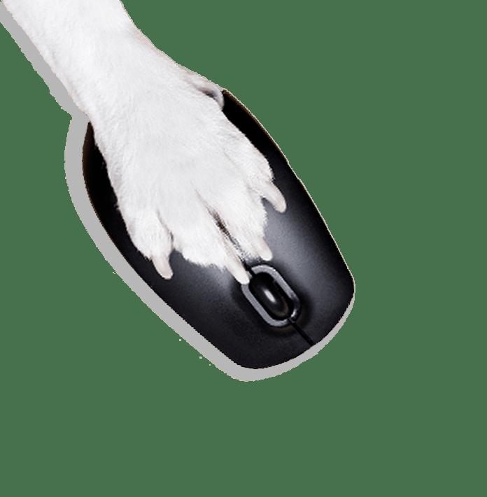 Pet services management hub list of Features