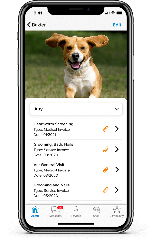 Pet services mobile app development Pet Records section